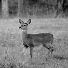 Young Deer by Cynthia48