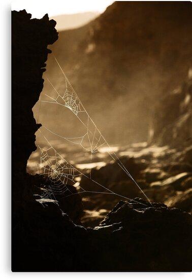 Webs v1 by Pirostitch