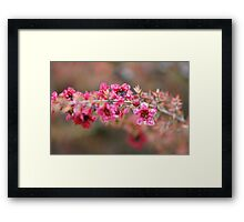 Blooms in Ernestos'  Yard; La Mirada Villages, La Mirada, CA USA Framed Print