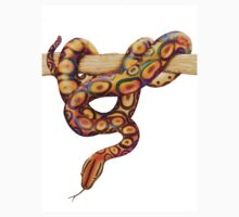 Rainbow Snake by Carolyn  McFann
