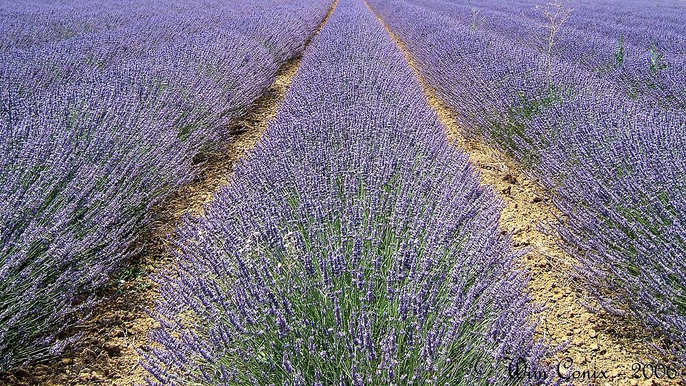 La Provence... by Wim Conix