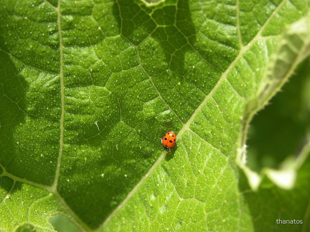 The hungry ladybug by thanatos