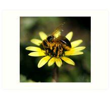 Pollen Coat Art Print