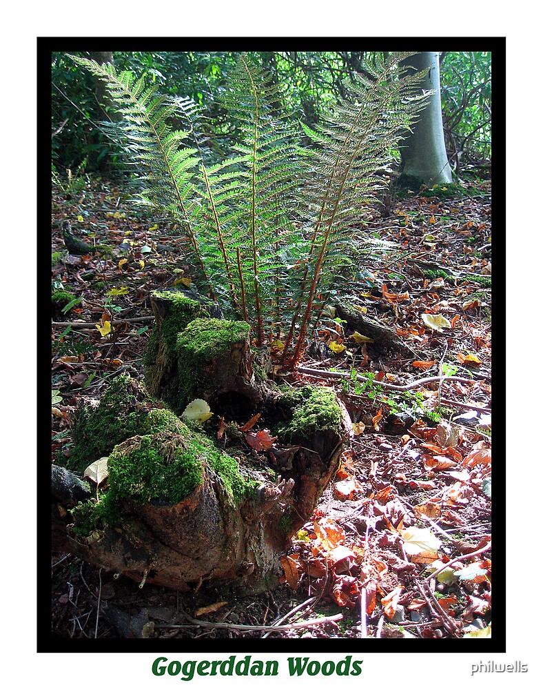Gogerddan Wood by philwells