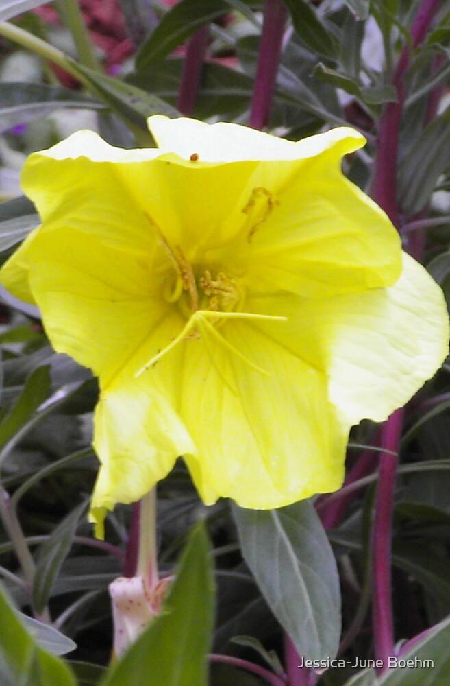 Yellow Flower by Jessica-June Boehm