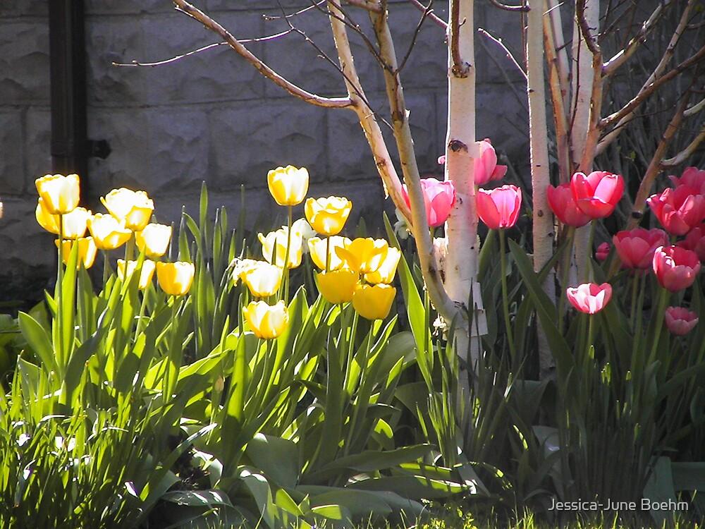 Sunshine Tulips by Jessica-June Boehm