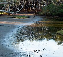 Nudgee Mudflats by J Harland