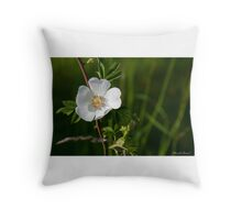 Soft Country Rose Throw Pillow