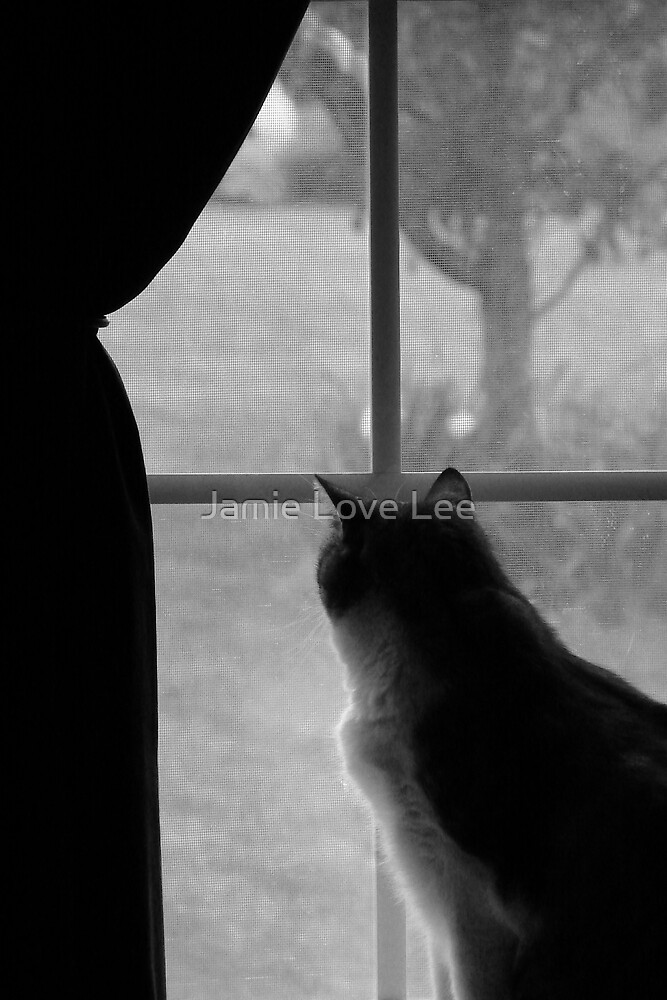 Waiting by Jamie Lee