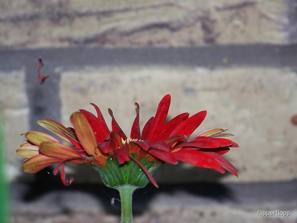 gerber daisy by flipperflopp