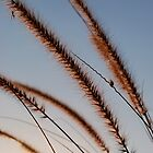 Cat Tail Grass by ahbdigital