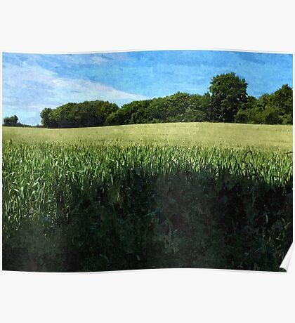 Green wheat field landscape Poster