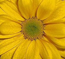 Flower Power by Clayton  Turner