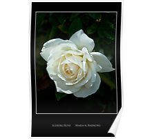 Soft White Rose - Cool Stuff Poster