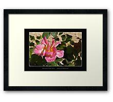 Brushed Pink Rose - Cool Stuff Framed Print