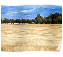 Beautiful wheat field landscape Poster