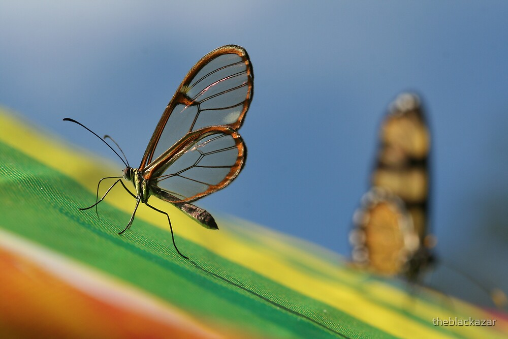 wings of glass by Ryan Bird