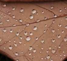 Bed of Diamonds by Stefan Trenker