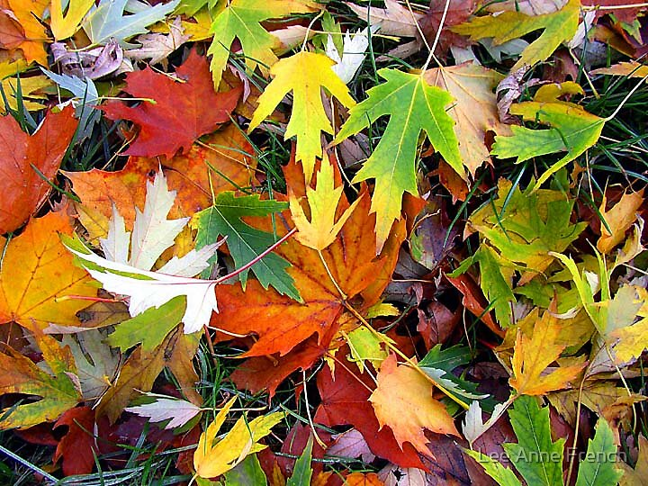 Nature's Carpet by Lee Anne French