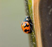 Lady Bug - Lady Bug Fly Away by Josh Prior