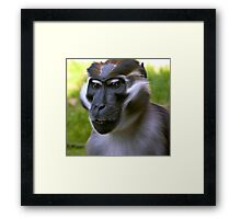 Mangabey Monkey Framed Print