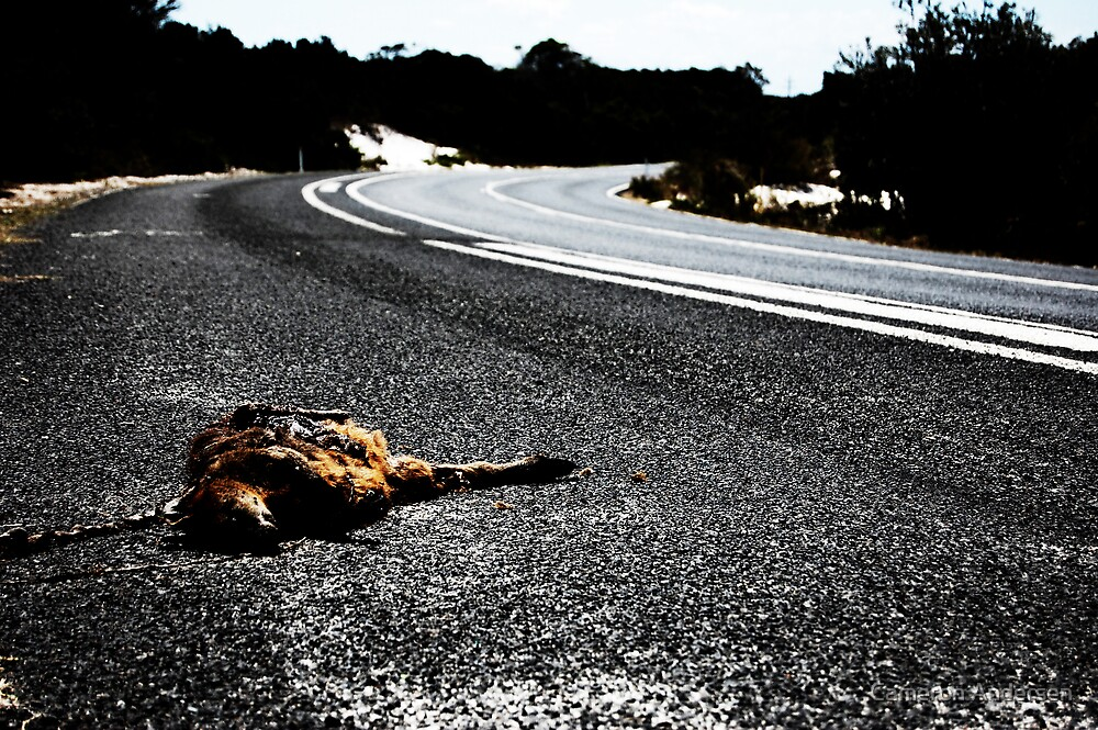 Road Kill. by Cameron Andersen