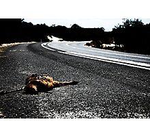 Road Kill. Photographic Print