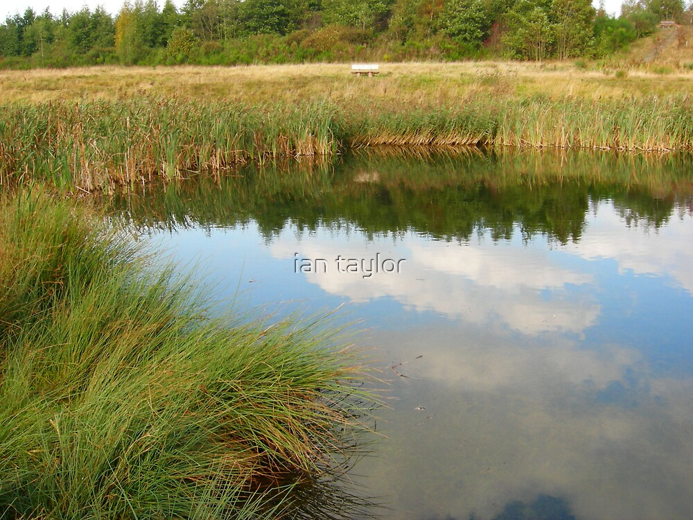 REFLEXTIONS by ian taylor