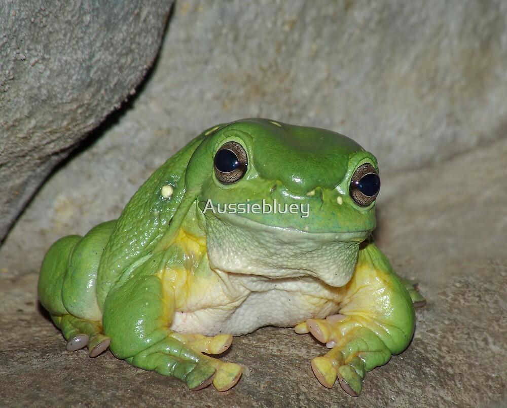 Green Tree Frog by Aussiebluey
