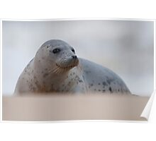 Norfolk Seal Poster