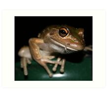 Washing Line Frog Art Print