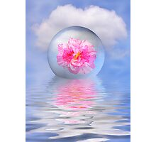 Rose globe Photographic Print