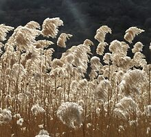 Wind and Light by aeolia