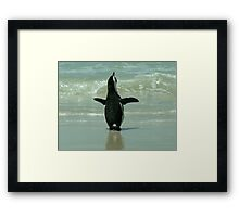Penguin on Beach Framed Print