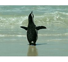 Penguin on Beach Photographic Print