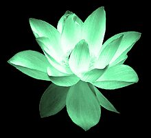 7 DAY'S OF SUMMER-YOGA ZEN RANGE- EMERALD GREEN LOTUS by 7 days of Summer
