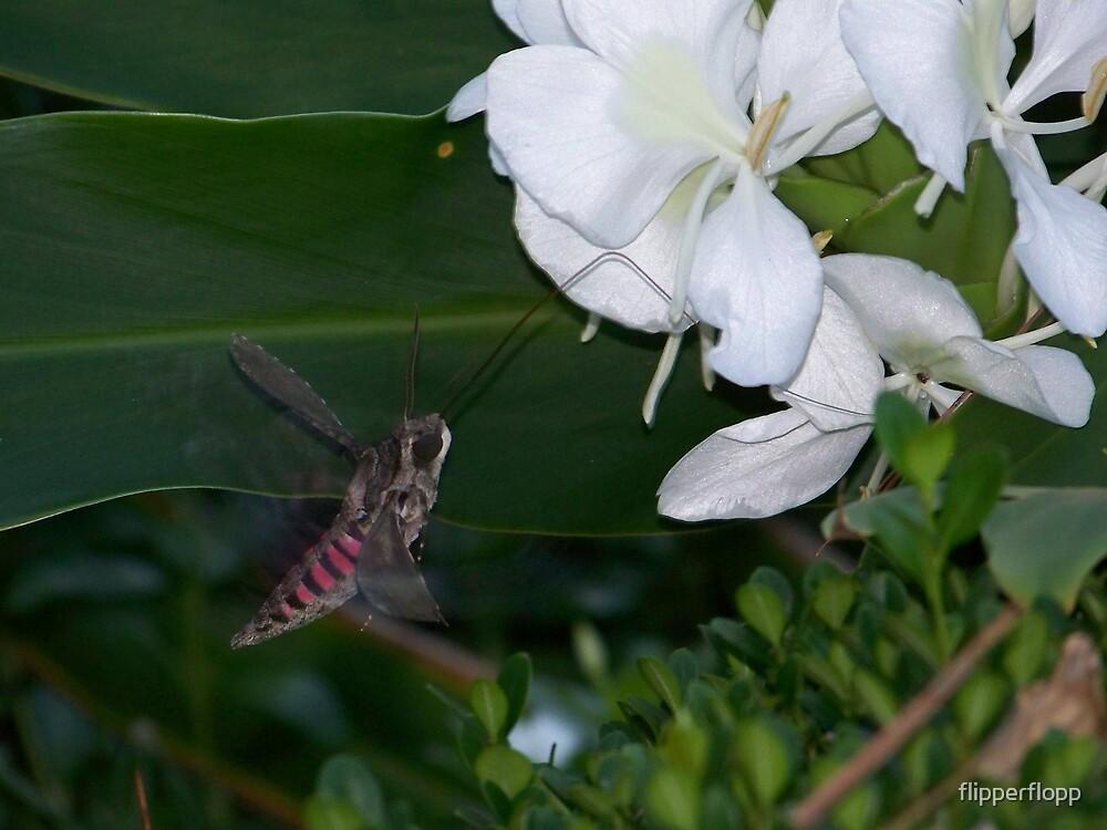 evening feeding of the moth by flipperflopp