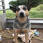 Cattle dog by Roboftheland