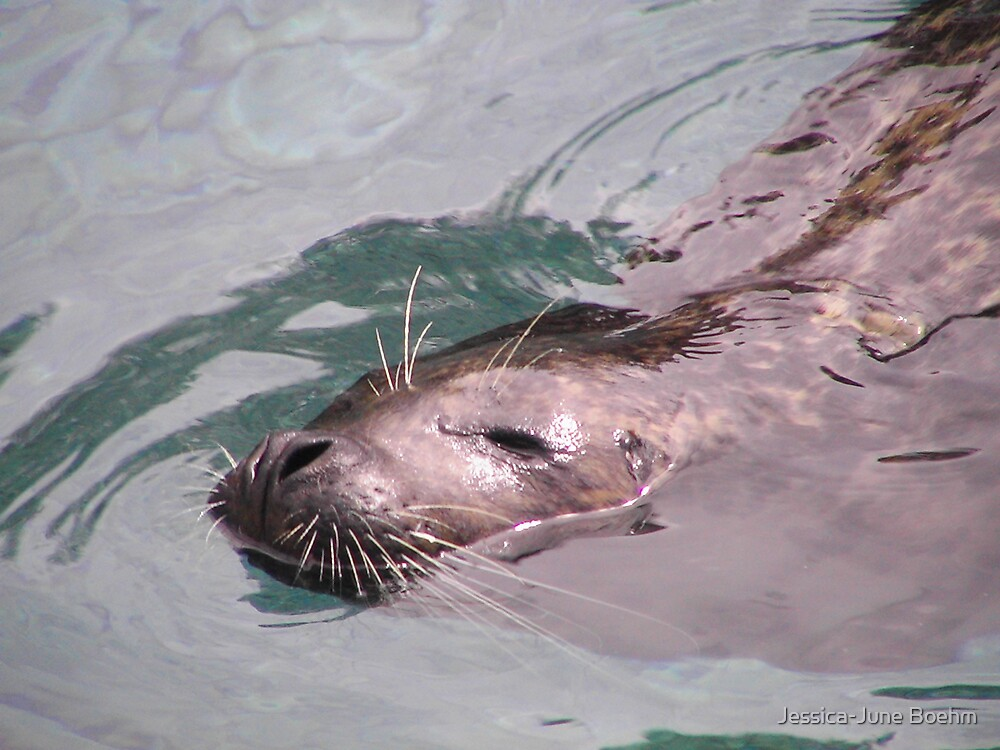 Lazy Sea Lion by Jessica-June Boehm