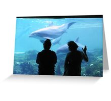 Dolphin Admiration Greeting Card