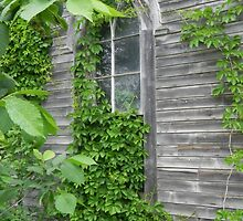 Nature's Window Covering by Martha Medford