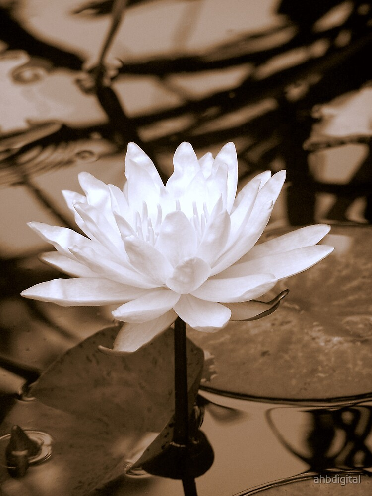 Soft Water Lilly by ahbdigital