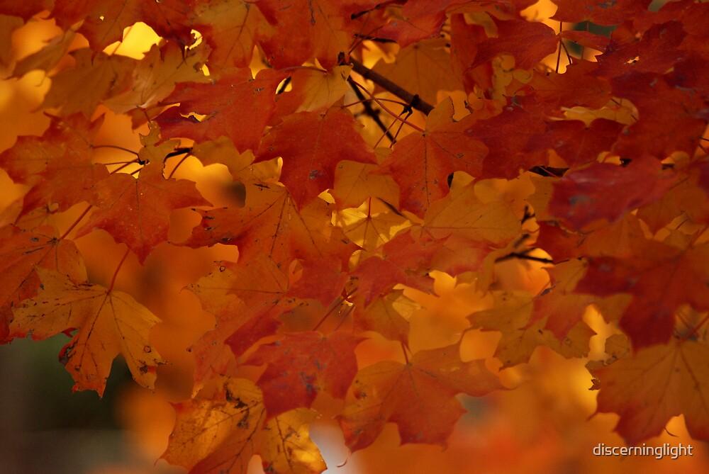 Golden Light by discerninglight