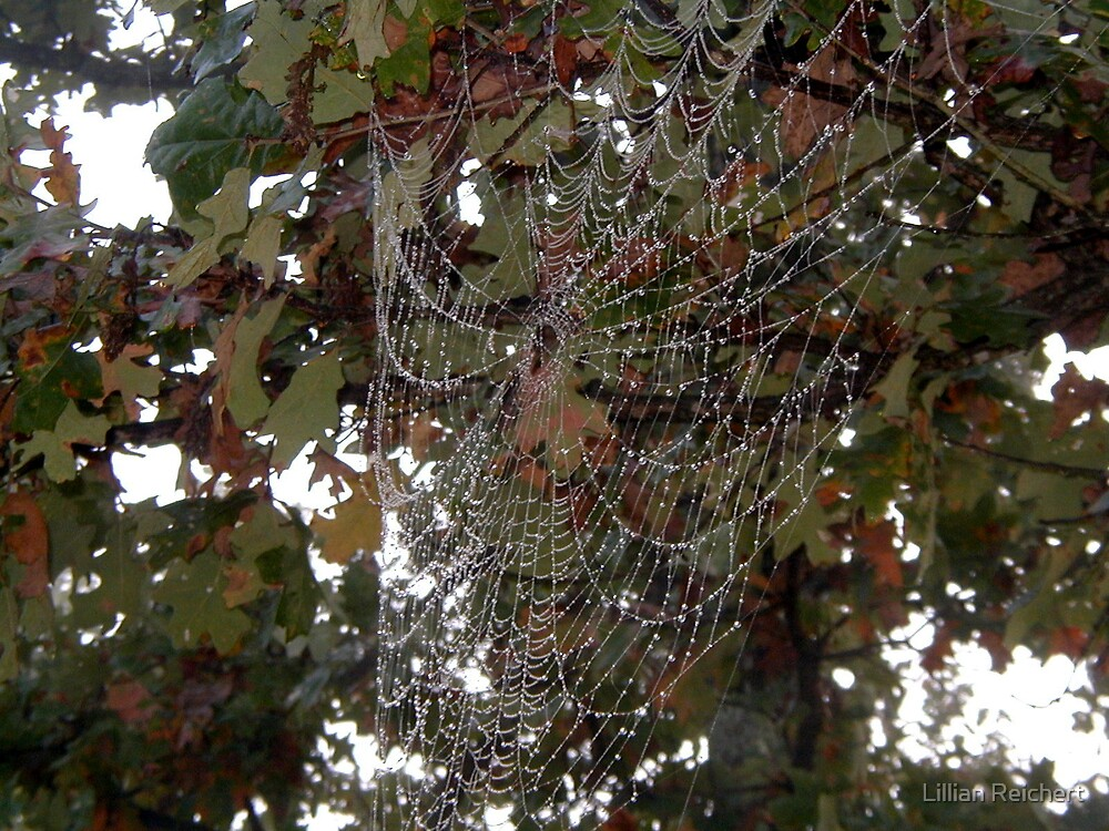 What A Web by Lillian Reichert