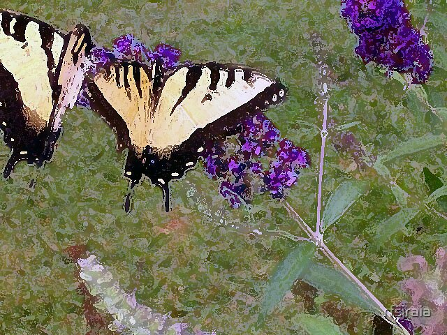 butterflies by rfsjraia