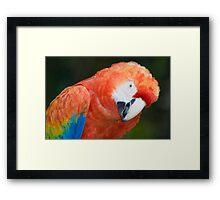 Scarlet Macaw Parrot Framed Print