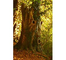 Tree Man  Photographic Print