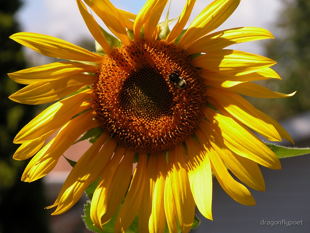 Garden Sunshine by dragonflypoet