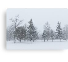 Snowstorm - Tall Trees and Whispering Snowflakes Canvas Print