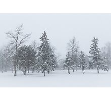 Snowstorm - Tall Trees and Whispering Snowflakes Photographic Print